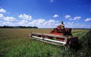Грант на развитие сельского хозяйству начинающему фермеру